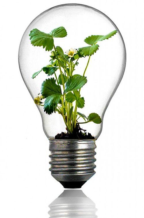 C mo reciclar bombillas - Como reciclar correctamente ...